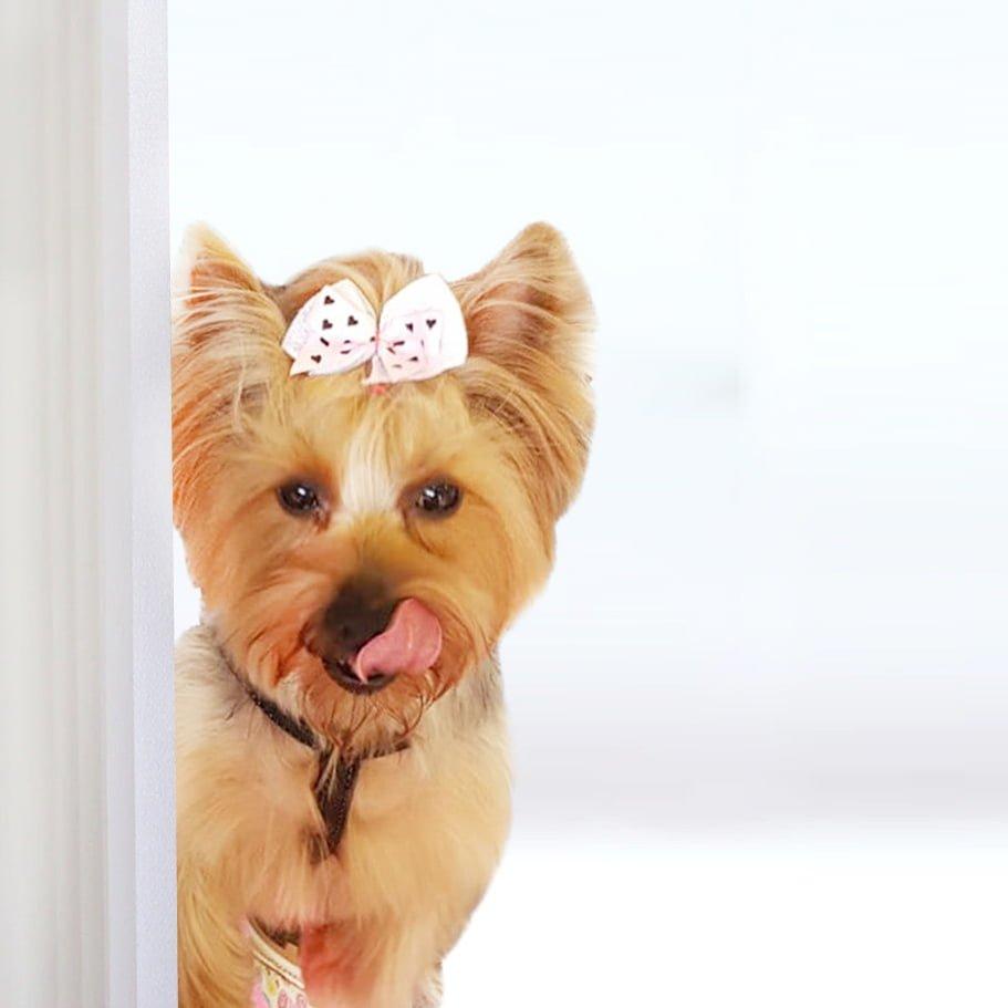 mimi-dog-mobile